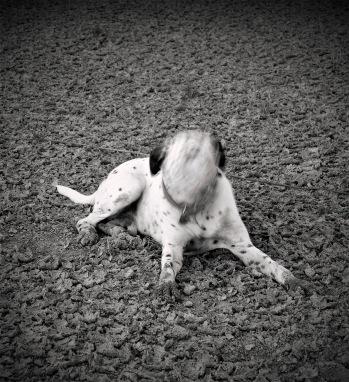Perro sin rostro - Paco Rocha