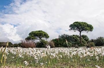 Flores de otoño. R. Sánchez