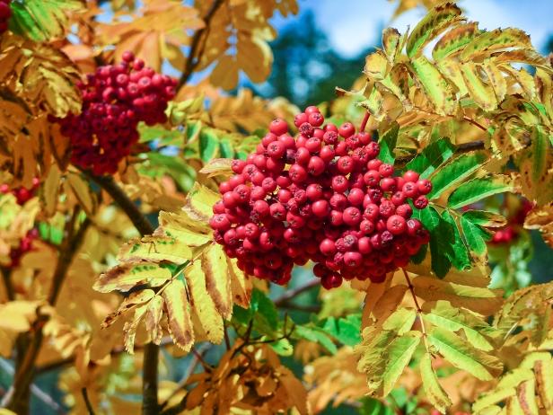 Frutas de otoño - R. Sánchez