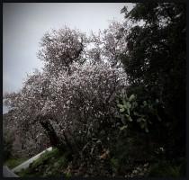 Presunto de Primavera - Juan M. Beardo