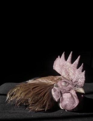 cabeza de gallo - R.Sánchez