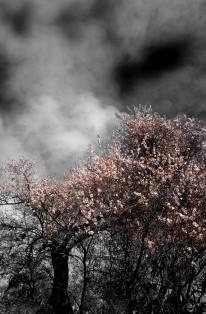 Presunto de primavera. Juan M. Beardo