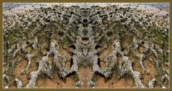 Art Naturae 21. Juan M. Beardo