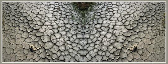 Art Naturae 26. Juan M. Beardo