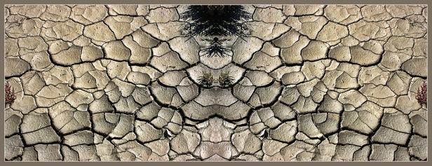 Art Naturae 27. Juan M. Beardo