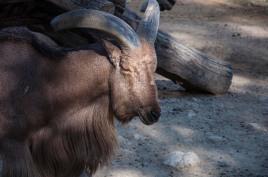 _Zoo 036 - R.Sánchez