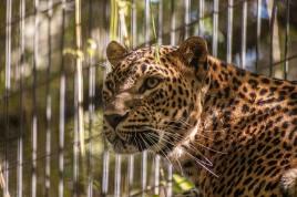 _Zoo 012 - R.Sánchez