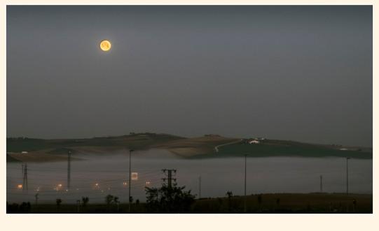 Niebla en la capiña de Jerez. Paco Rocha