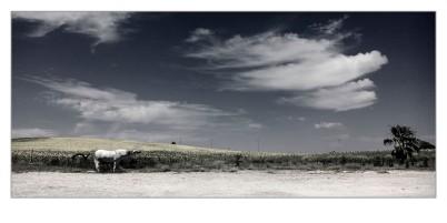 Campiña de Jerez. Paco Rocha