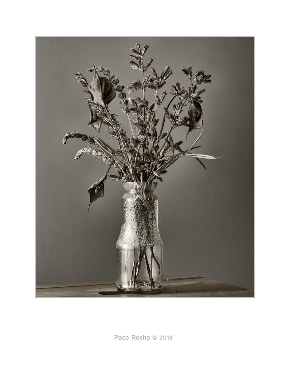 paco rocha naturaleza muerta tercero efe jarron flores secas blanco negro baja saturacion