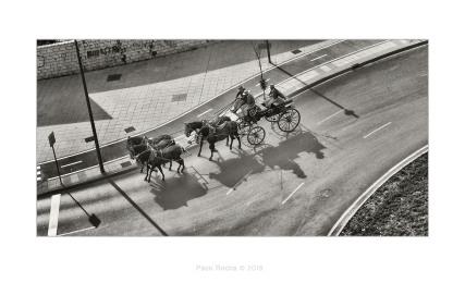 feria jerez coche caballos paco rocha carruaje rotonda sombra blac white blanco negro horses sherry